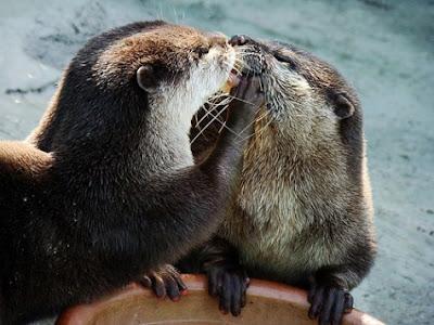 Funny-Animal Love photos