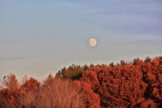 November moonrise over woods