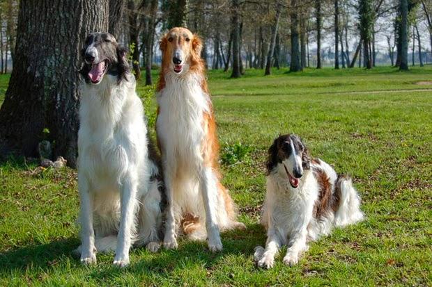 Los Perros desobedientes