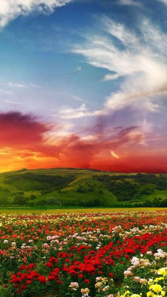 Beautiful Color Landscape And Sunset A1 Pictures