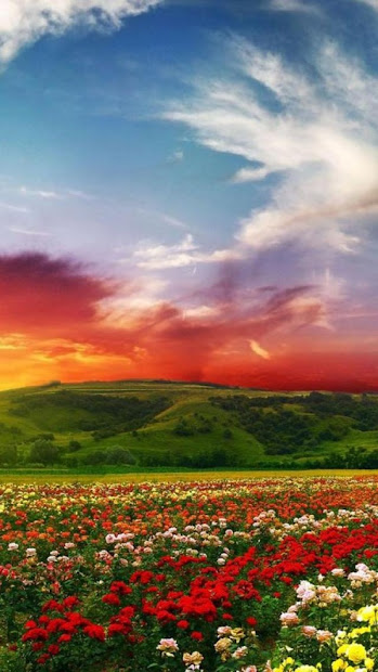 beautiful color landscape and sunset