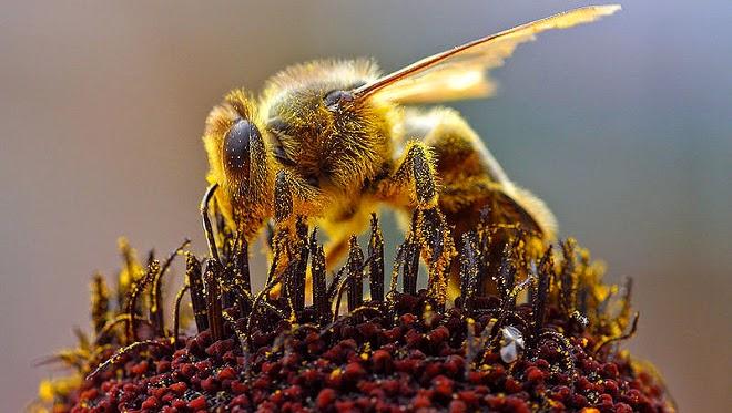 Insecticidas y deforestación, causas de la disminución de abejas