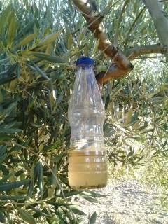 Yo cultivo aceite verdial de la axarqu a trampa casera - Trampa casera para moscas ...