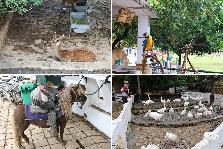 travel Vigan Ilocos Tour Sur Philippines tour tourism Baluarte zoo Chavit Singson