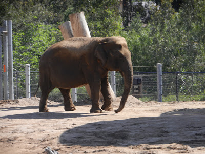San Diego zoo elephant picture