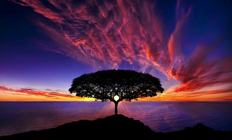 Gambar Pohon Cantik Pemandangan Alam Indah Wallpapers