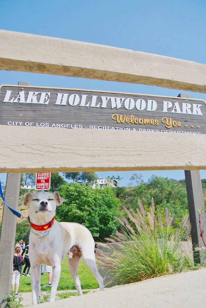 hollywood dog park