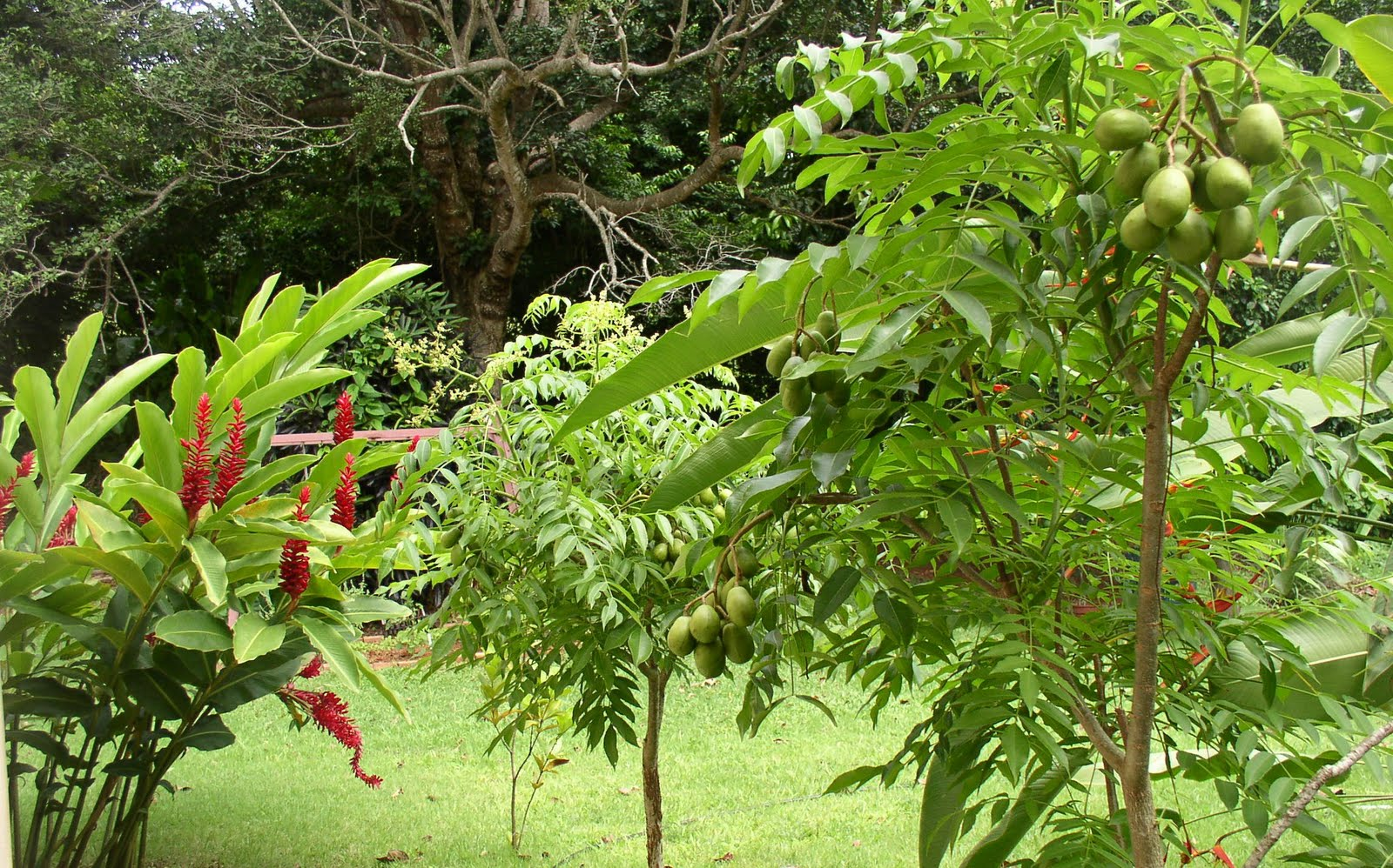 Rboles frutales en tu jard n agrochic gardening content for Arboles frutales para jardin
