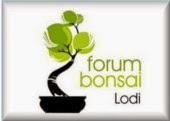 http://forumbonsailodi.forumattivo.com/