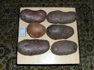 картофель сорт Кубинка