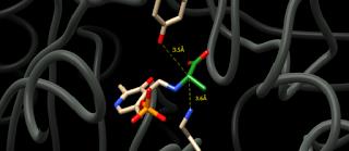 Alanin (L-Alanine), Sumber, Fungsi, Manfaat, Dosis Dan Efek Samping