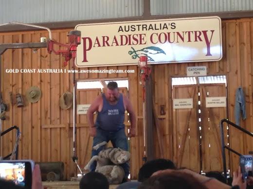 Demo cukur biri-biri dalam Paradise Country Farm