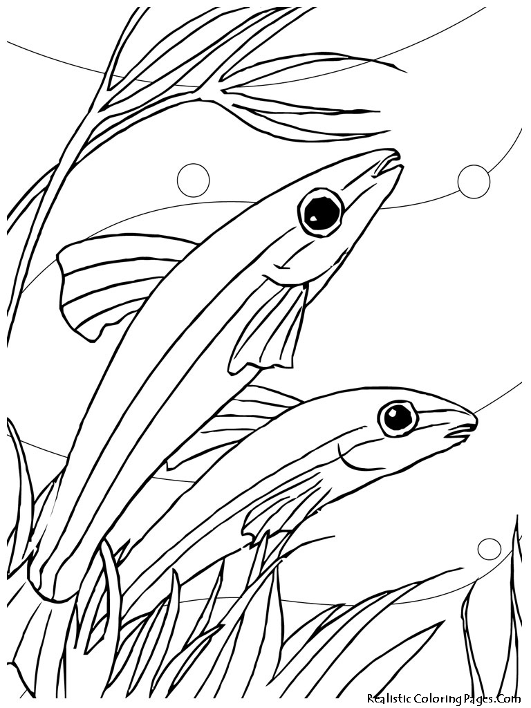 coloring pages and tropical fish - photo#28