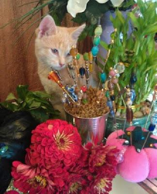 Kitten and zinnias - Stein Your Florist Co.