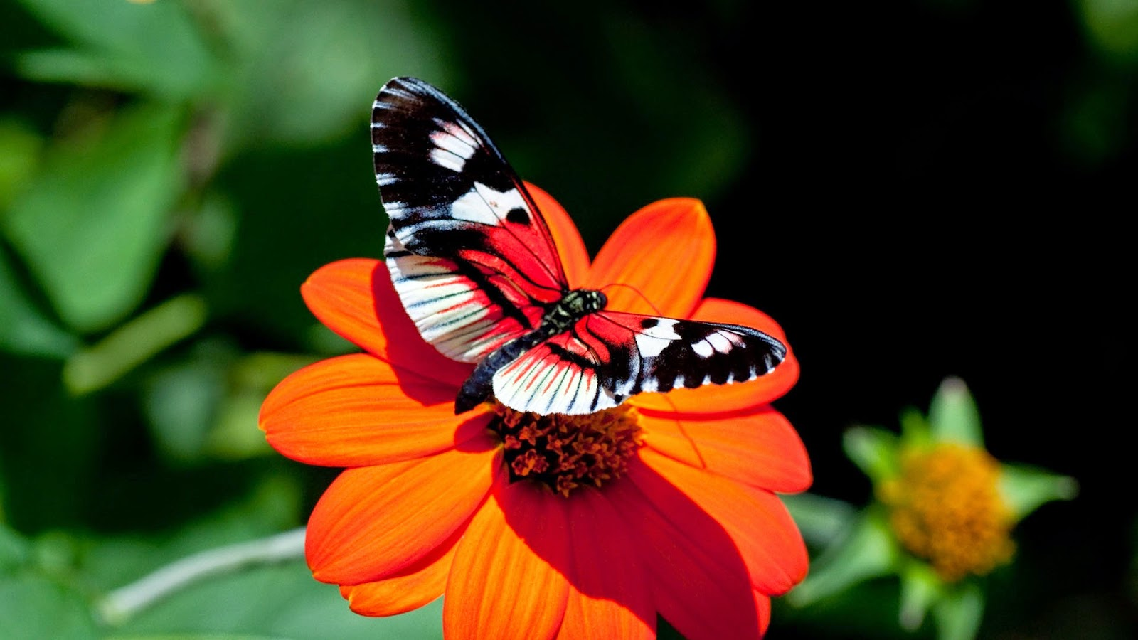 latest wallpapers of butterflies - photo #19