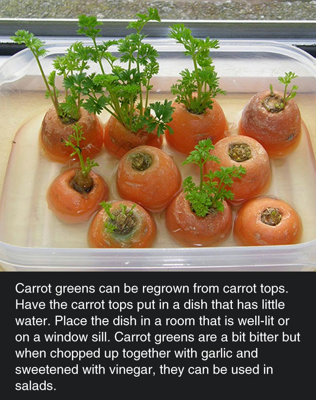 8 vegetables you can buy once and then regrow forever