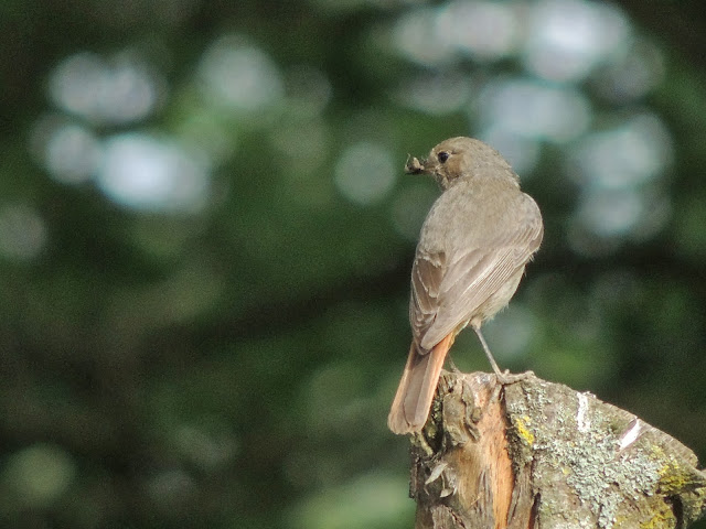 petits oiseaux insectivores