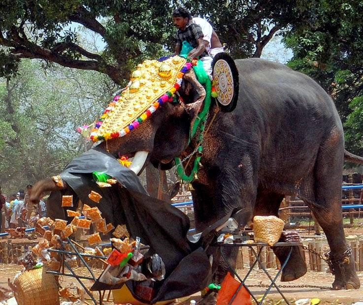 Kerala elephant thechikottukavu ramachandran attack