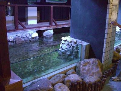 Peces y plantas ornamentales estanques marinos for Estanques para peces ornamentales