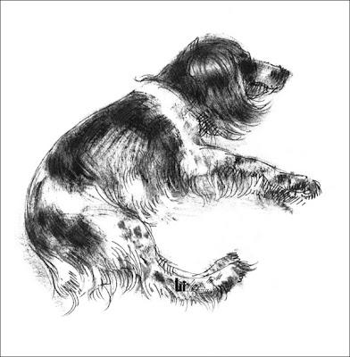 dessin animal (dessin chien épagneul)