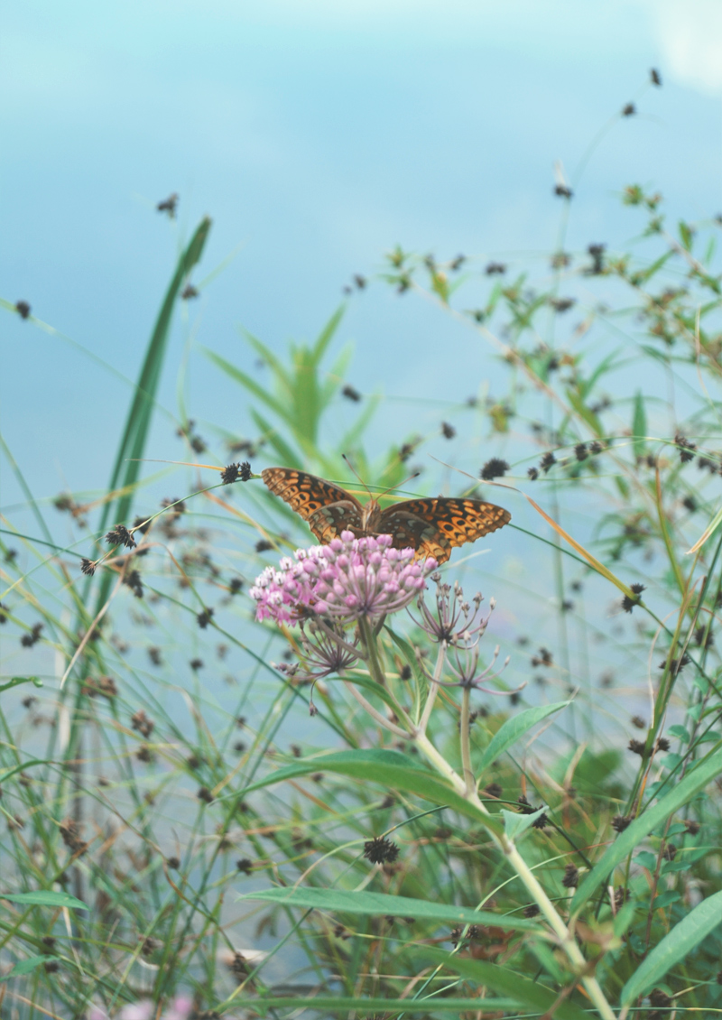 The Flying Clubhouse: August Gold | Great spangled fritillary
