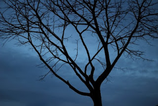 Heure Bleue Hora Azul Fotografia Joao Pires