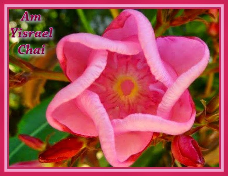 Photo of pink flower in shape of Star of David