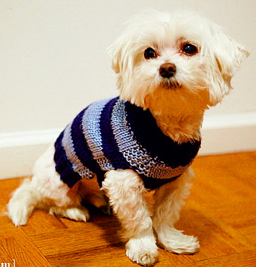 Knit Dog Coat Free