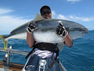 Big Fishes of the World: YELLOWTAIL SOUTHERN (Seriola lalandi)