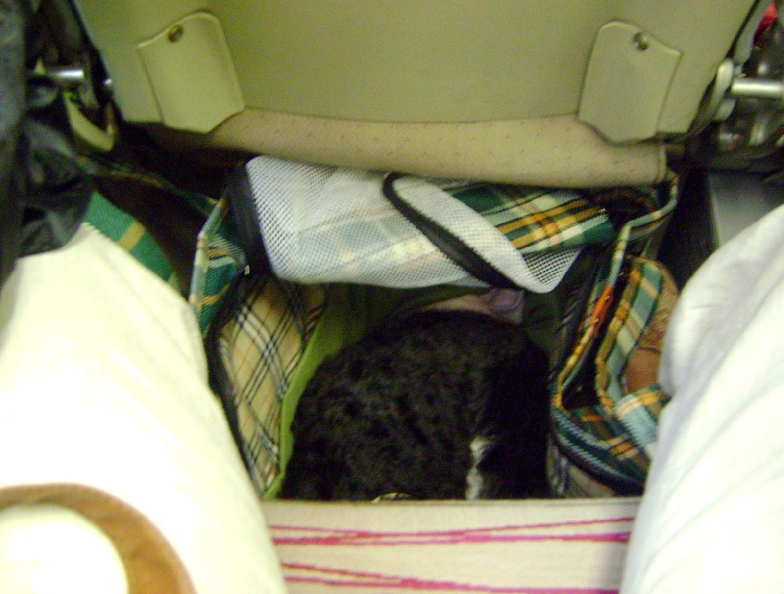 Bolsa De Transporte Caes Aviao : Te sigo pelo mundo viajando de avi?o com cachorro