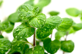 Mint naturally numbs and reduces pain.