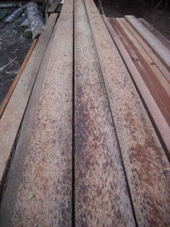 jenis kayu yang paling laris di pasaran
