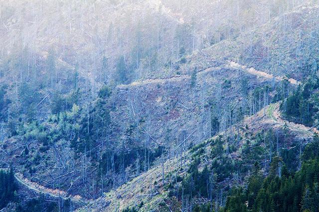 logging selective hidden impacts environment ecosystem ecologic despădurire defrișare maramureș România Transylvania deforestation Carphathians Carpați