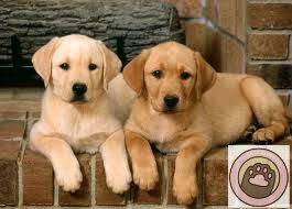 Carne di cane commestibile e bufale