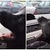 Τι κάνει ο σκύλος, όταν βρίσκει το κλιματιστικό (βίντεο)...