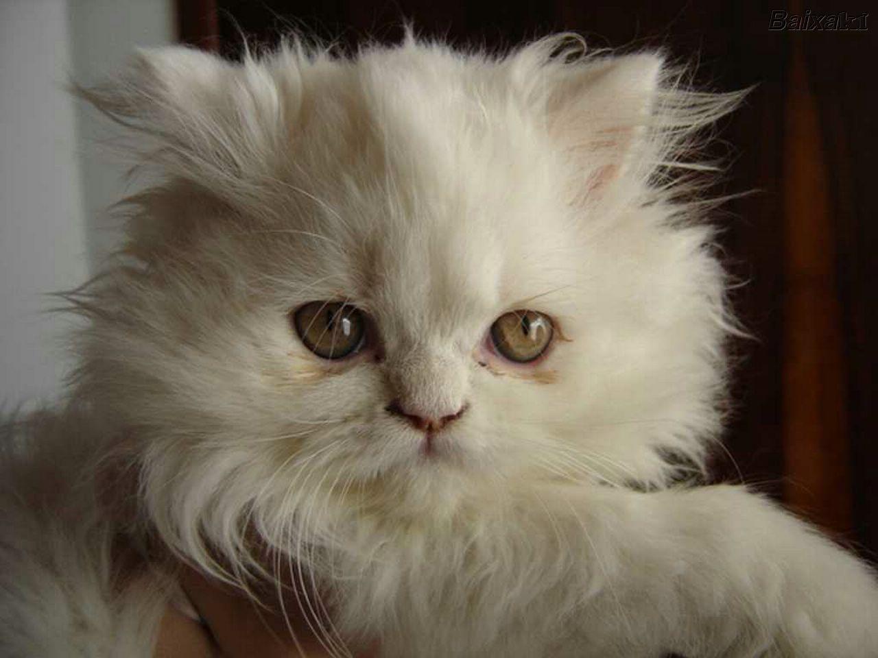 Los gatos pueden ser peludos, más peludos o peludísimos