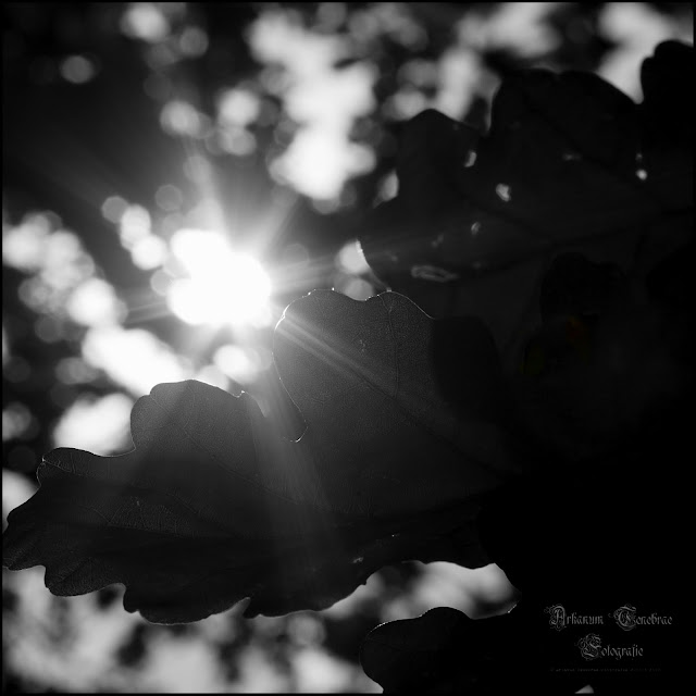 Eichenblatt mit Sonnenstrahlen