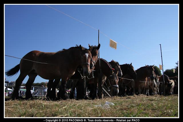 vue d'ensemble des chevaux de trait à la foire Commerciale et Agricole de Sedan