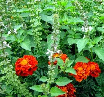 Hedgewitch's Garden