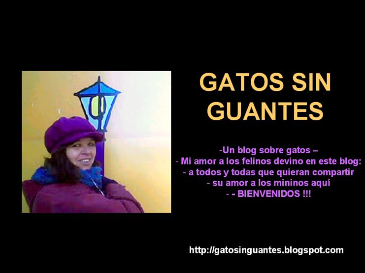<br><br>GATOS SIN GUANTES