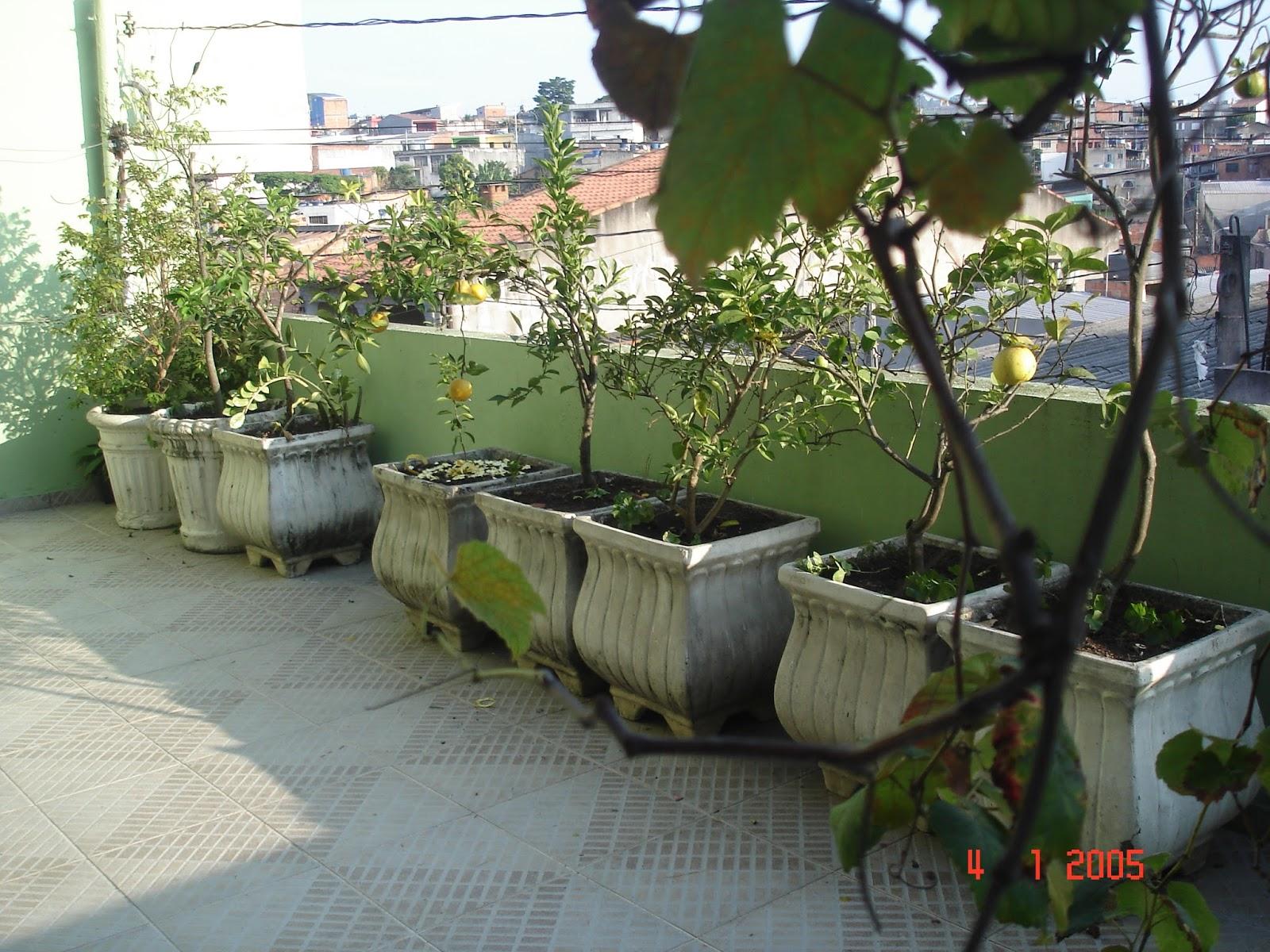 Pomar E Horta Em Vasos~ Plantas De Jardim Horta E Pomar