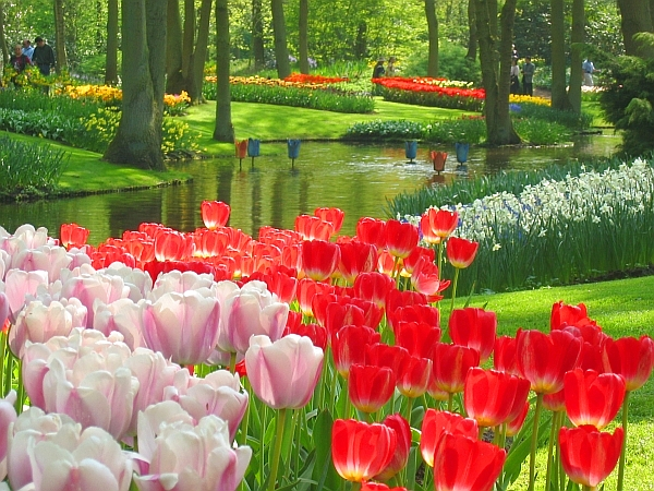Flower garden in the Netherlands