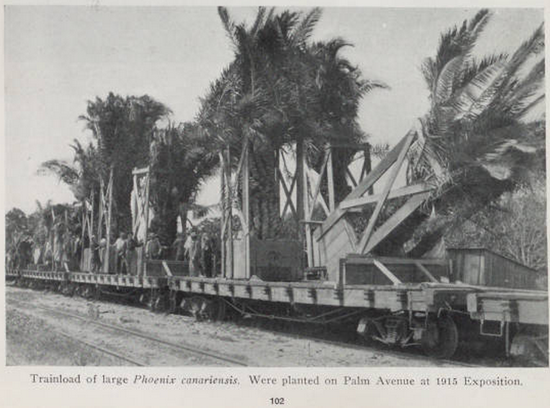 The California Nursery Company In Niles Supplied Many Palm Trees For Panama Pacific International Exposition 1915 Catalog There Is A Photo Of
