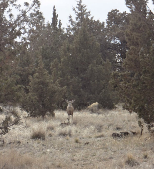 deer at smith rock bivouac campground