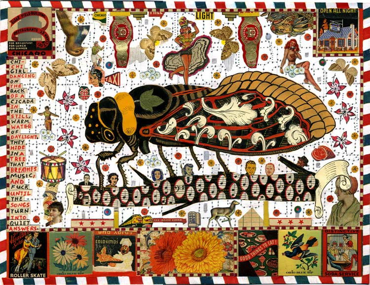 Cicada Symbolism Rebirth Authenticity Eternity Intergalactic