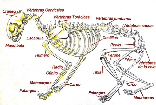 Enciclopedia de animales-on line