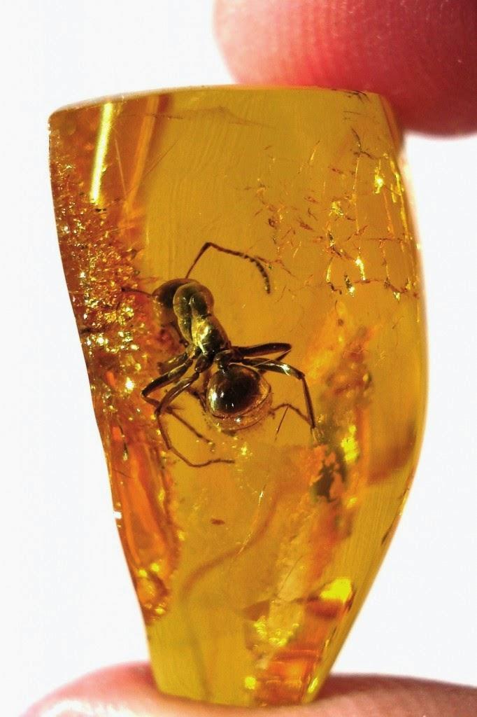 Mέσα σε κεχριμπάρι από τις Άλπεις, το αρχαιότερο διατηρημένο έντομο