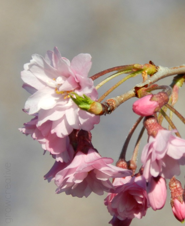 Spring Blossom Photography: Grow Creative