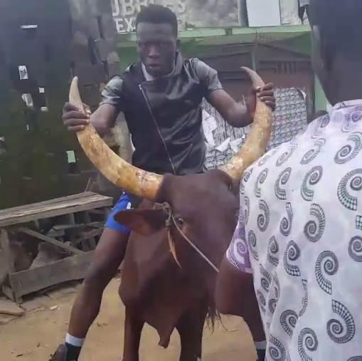Comedian Akpororo riding his cow to Warri,Akpororo on a cow,Akpororo rides a cow,Akpororo and cow