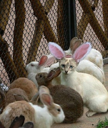 Cat in the Bunny Pile!